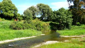 River crossing a green meadow with trees in the background (4K) stock footage