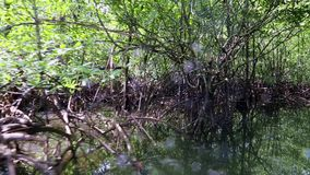 River cruise in mangrove forest in the jungle stock video footage