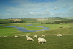 River Cuckmere, East Sussex, England, Uk. Sheep grazing in tranquil rural scene in South Downs National Park Stock Images