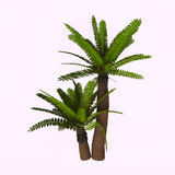 River Cycad Plants Stock Photo