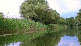 River in Danube Delta stock footage