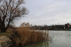 River Danube in winter. Near Budapest, Hungary stock images