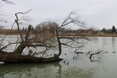 River Danube in winter royalty free stock image