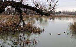 River Danube in winter. Near Budapest, Hungary stock image