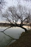 River Danube in winter. Near Budapest, Hungary royalty free stock images
