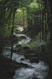 River in dark forest Royalty Free Stock Photography