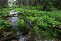 River in the dark swampy forest Stock Photo