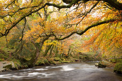 River Dart Stock Images