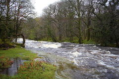 River Dart, Dartmoor national Park, Devon Stock Photo