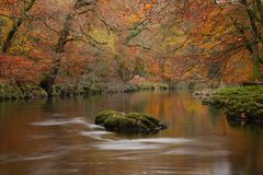 Free River Dart Flows Through Woodland Stock Images - 164759614