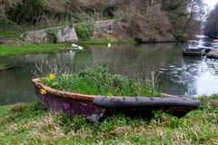 The River Dart, near Dartmouth Devon A small upstream boat yard. With swans swimming in the water at high tide. A small boat previously used to plant flowers royalty free stock photo