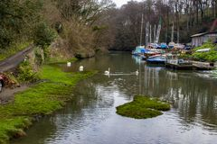 The River Dart, near Dartmouth Devon A small upstream boat yard. With swans swimming in the water at high tide stock photos