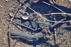 River debris. Close view detail of some river debris on the shore Stock Photos