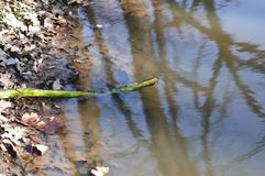 River debris. Close view detail of some river debris on the shore Stock Photography