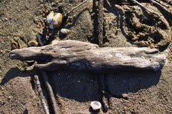 River debris. Close view detail of some river debris on the shore Stock Images