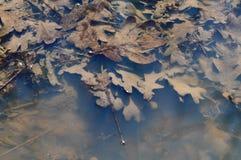 River debris. Close view detail of some river debris on the shore Stock Image