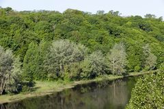 River and deciduous trees Royalty Free Stock Images