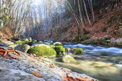 River deep in the forest. Beautiful rapid river with mossy stones flowing through autumn forest Stock Photos