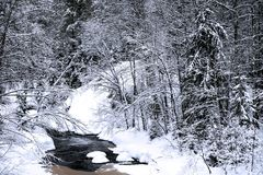 River in deep forest in winter season Stock Image