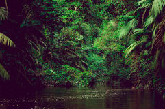 River deep in jungle forest. Amazonas composition. Stock Photos
