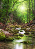 River deep in mountain forest Stock Photography