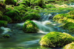River deep in mountain forest Royalty Free Stock Photos