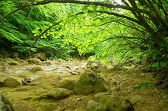 River deep in mountain forest. Stock Photos