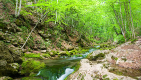 River deep in mountain forest. Royalty Free Stock Image