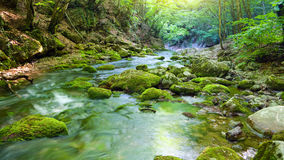 River deep in mountain forest. Royalty Free Stock Photo