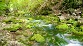River deep in mountain forest. Stock Images