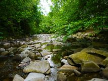 River deep in mountain forest. Nature composition Royalty Free Stock Images