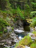River deep in mountain forest. Nature composition Royalty Free Stock Image