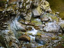 River deep in mountain forest. Nature composition Stock Photography