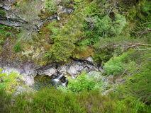 River deep in mountain forest. Nature composition Royalty Free Stock Photography