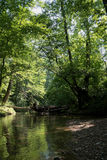 River deep in mountain forest. Nature composition. Mountain river flowing through the green forest Stock Photography