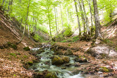 River deep in mountain forest Royalty Free Stock Photography