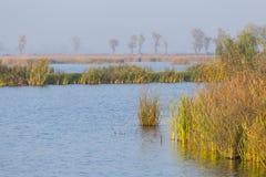 River delta reed. Stock Photos