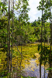 The river in the dense jungles of Thailand Royalty Free Stock Photo