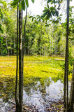 The river in the dense jungles of Thailand Royalty Free Stock Image