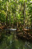 The river in the dense jungles of Thailand Royalty Free Stock Photography