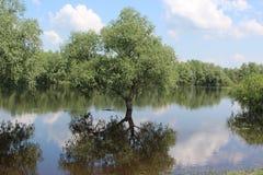 River Desna Royalty Free Stock Photos