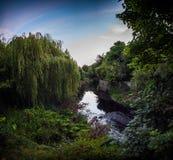 River Dodder in Dublin. The River Dodder and lush vegetation on its banks, Dublin, Ireland Stock Photography