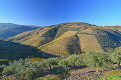 River Douro Royalty Free Stock Image