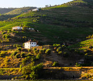 River Douro valley, Portugal Royalty Free Stock Photo