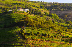 River Douro valley, Portugal Stock Photography