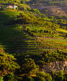 River Douro valley, Portugal Royalty Free Stock Image