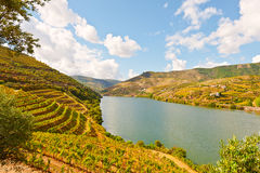 River Douro. Vineyards in the Valley of the River Douro, Portugal stock images