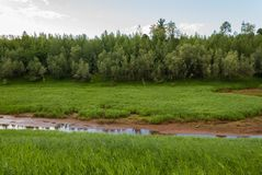 The river dries up in the Taiga. One of the sleeves of the canal Langepas dries at the end of summer Stock Photos