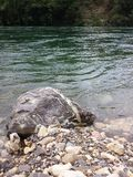 River Drina Royalty Free Stock Image