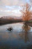 River at Dusk, Friuli. A river in mid winter in the Italian region of Friuli Stock Image